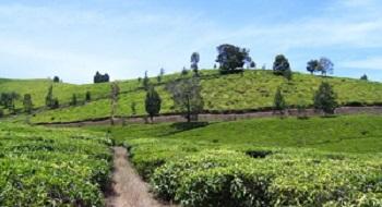 pemandangan tempat wisata outbound kebun teh wonosari malang